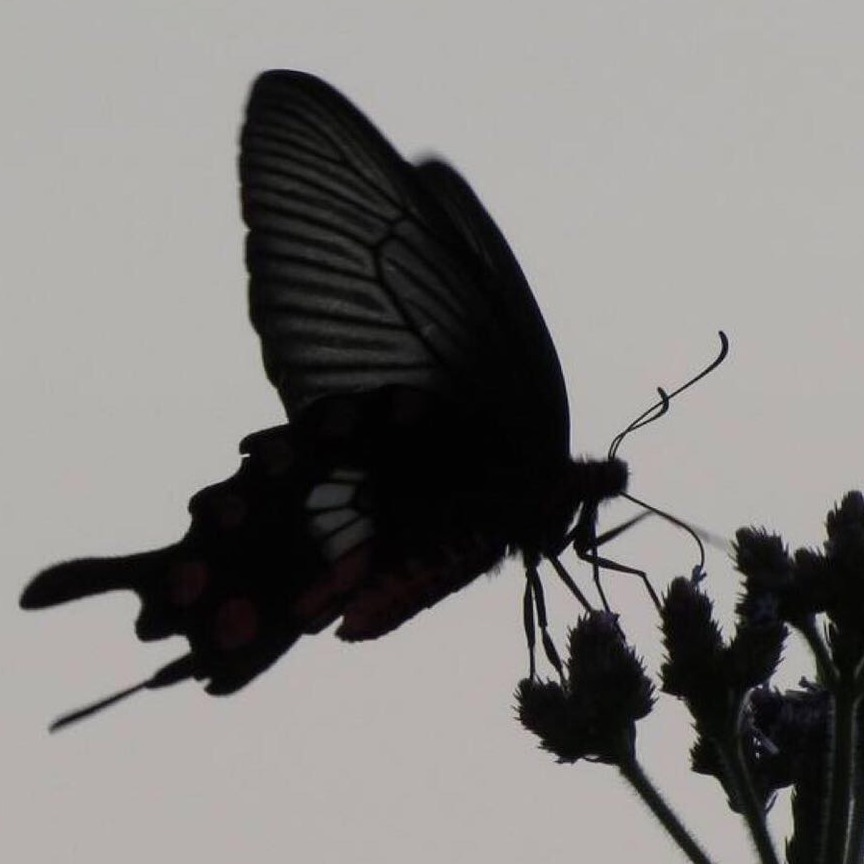 Monarchll